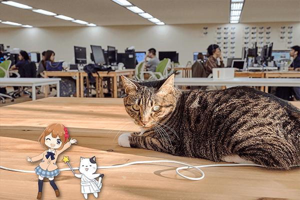 『広々とした執務エリアで人も猫ものびのび  筋トレ部屋もうれしいみんなのマーケットのオフィス』のサムネイル